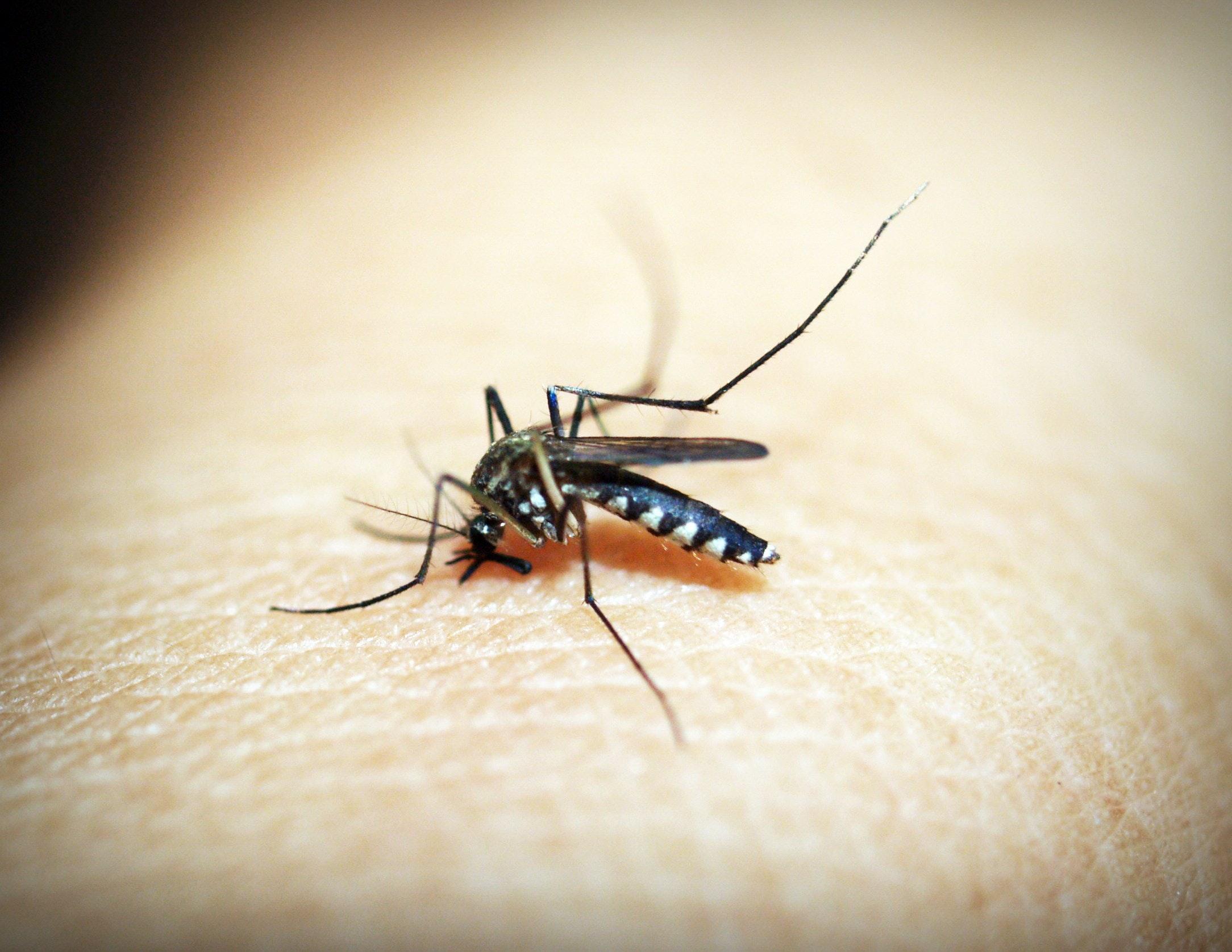 dengue huasteca hidalguense